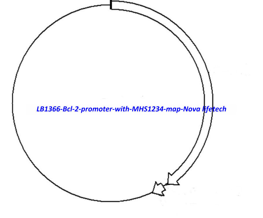 LB1366 (Bcl- 2 promoter with MHS1234)
