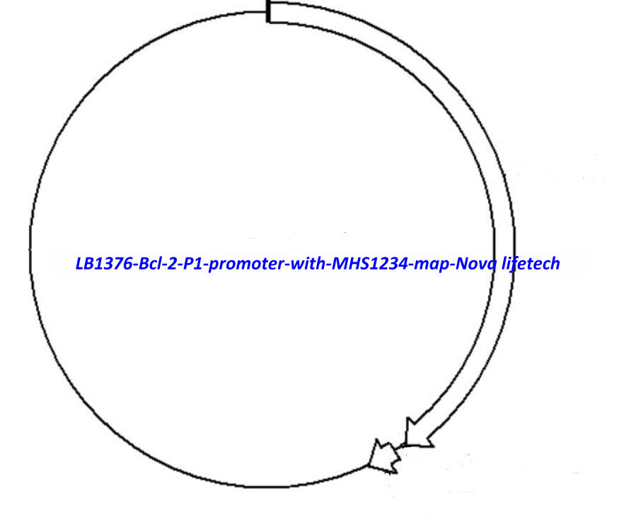 LB1376 (Bcl- 2 P1 promoter with MHS1234)