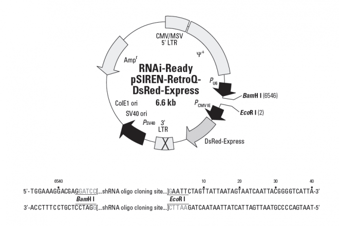 RNAi-Ready pSIREN-RetroQ-DsRed-Express - Click Image to Close