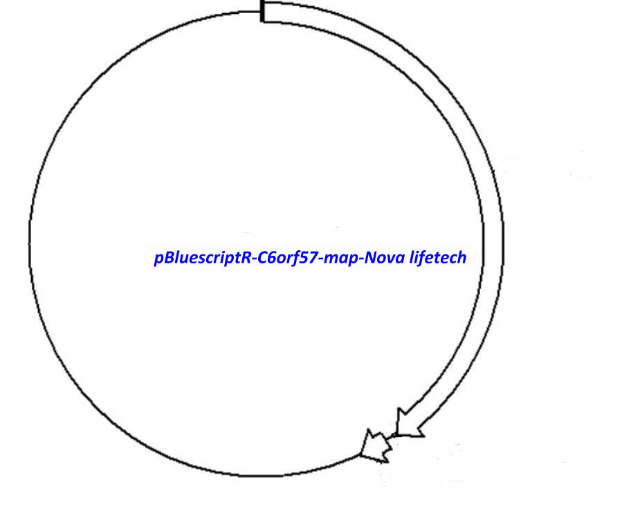pBluescriptR-C6orf57 Plasmid