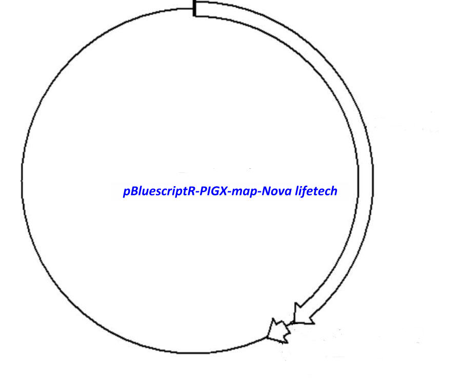 pBluescriptR-PIGX Plasmid
