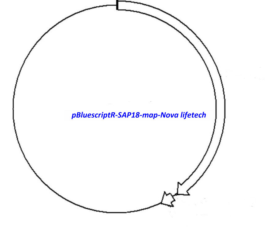 pBluescriptR-SAP18 Plasmid