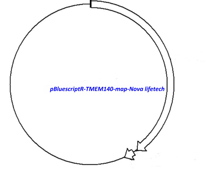 pBluescriptR-TMEM140 Plasmid