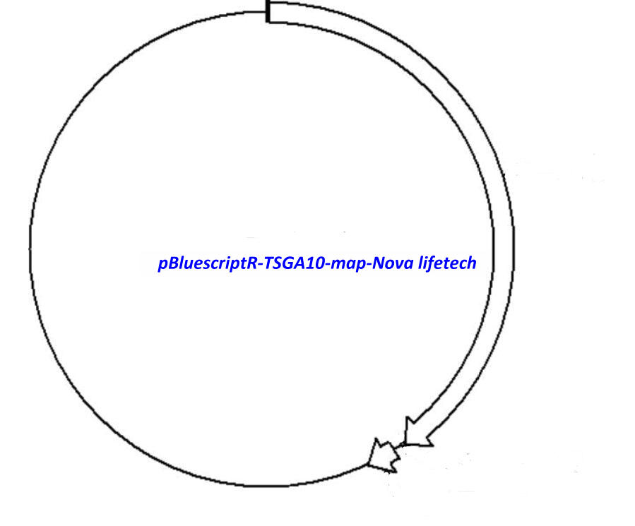 pBluescriptR-TSGA10 Plasmid