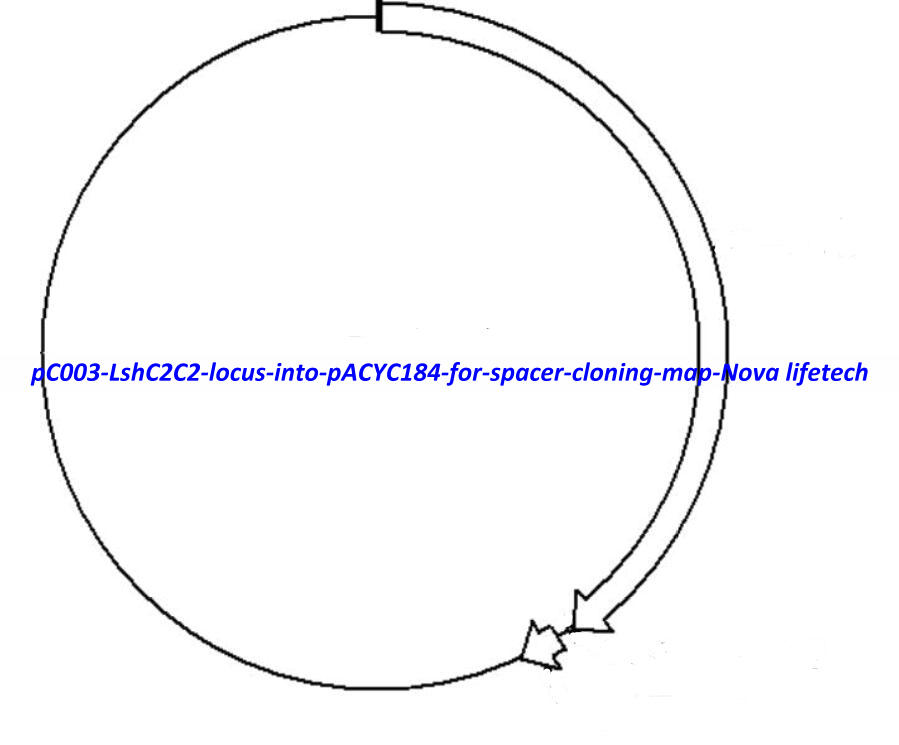 pC003 - LshC2C2 locus into pACYC184 for spacer cloning