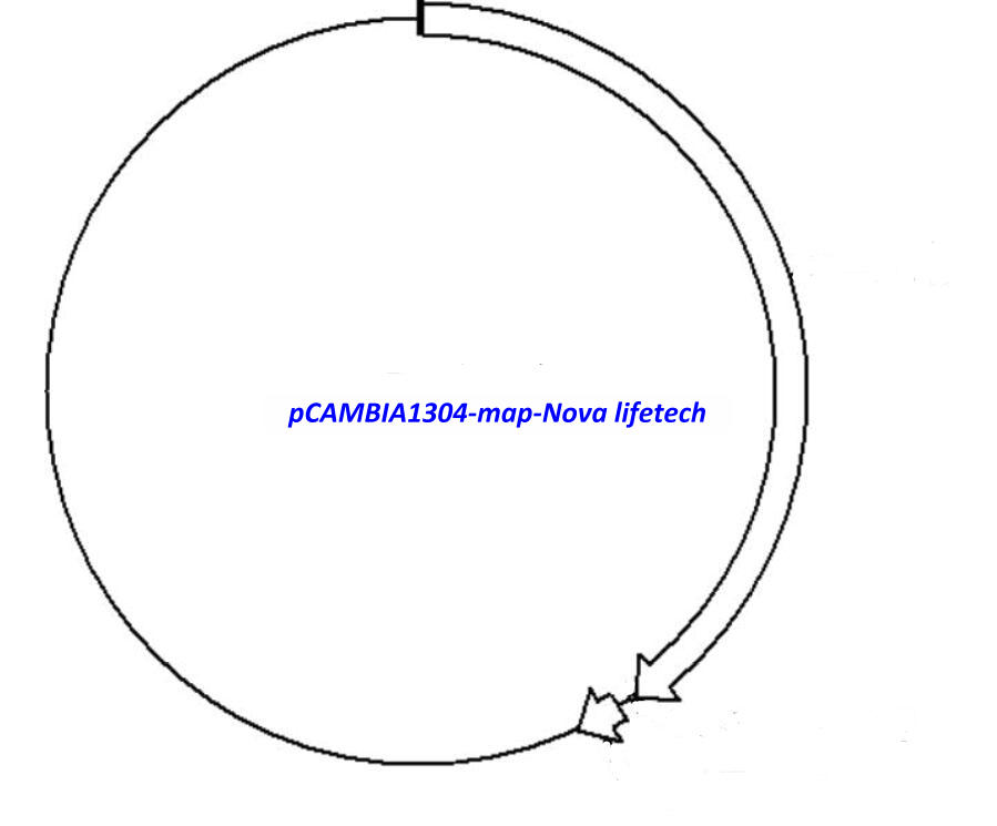 pCAMBIA1304 Plasmid