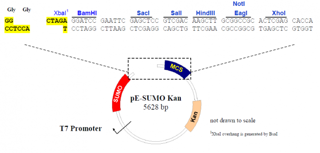 pE-SUMO - Click Image to Close