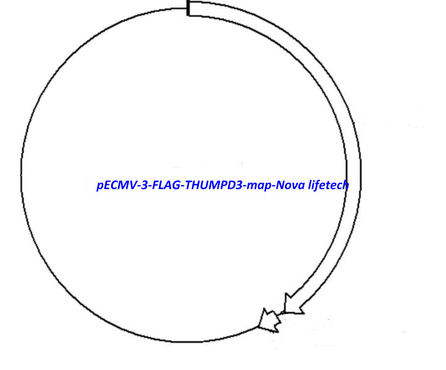 pECMV-3-FLAG-THUMPD3