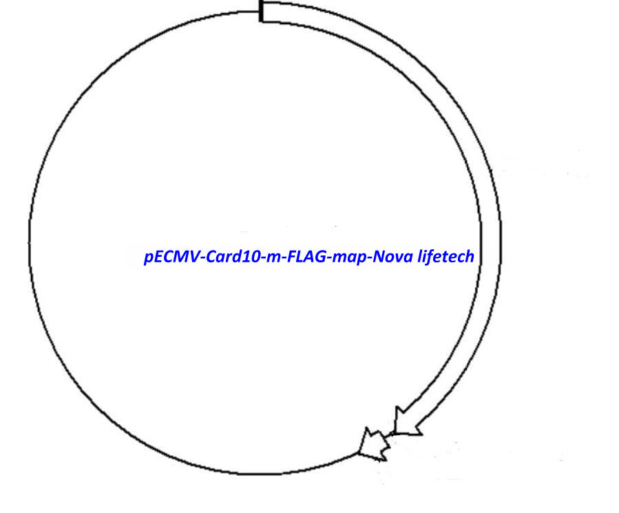 pECMV-Card10-m-FLAG Plasmid