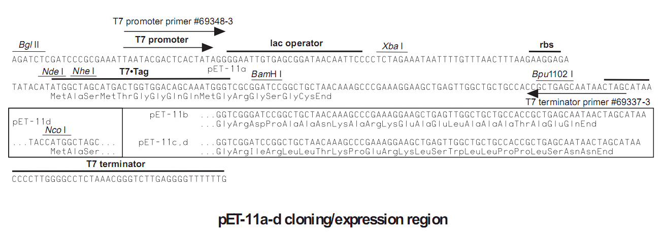 pET-11c-plasmid
