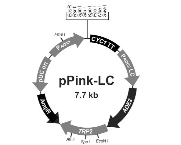 pPINK- LC Plasmid