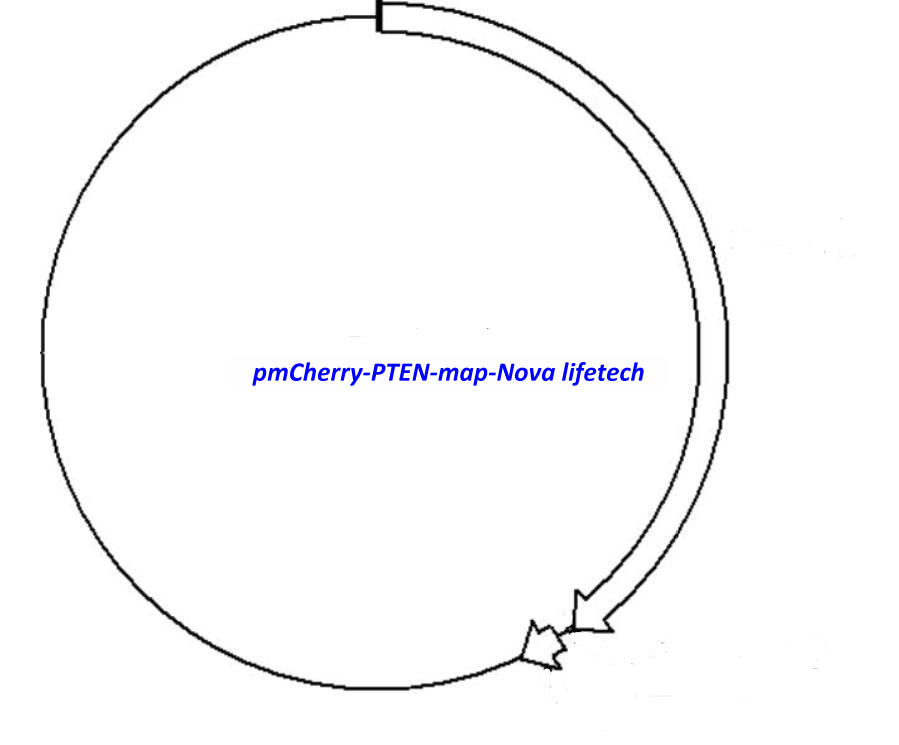 pmCherry-PTEN Plasmid